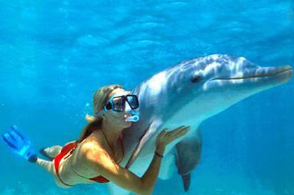 Dolphin - Snorkel